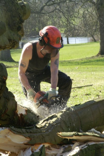 Tree Surgeon Chainsaw Carver Chainsaw Carving And Gardener
